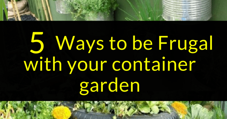 5 Ways to be Frugal with your container garden