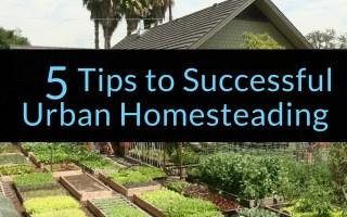 5 Tips to Successful Urban Homesteading, urban homesteading, homesteading, Backyard Eden, www.backyard-eden.com, www.backyard-eden.com/5-Tips-to-Successful-Urban-Homesteading