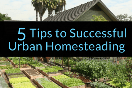 5 Tips to Successful Urban Homesteading, urban homesteading, homesteading, Backyard Eden, www.backyard-eden.com, www.backyard-eden.com/5-Tips-to-Successful-Urban-Homesteading