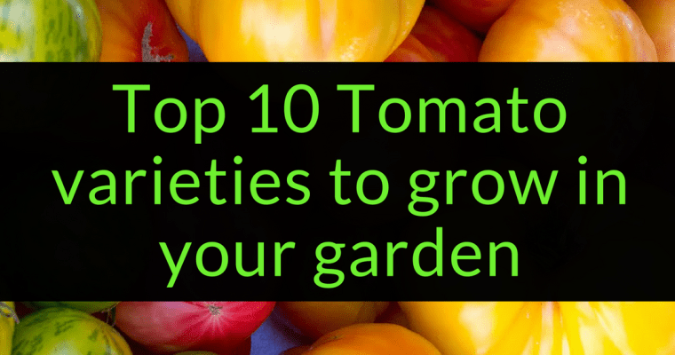 Top 10 Tomato Varieties to grow in your garden