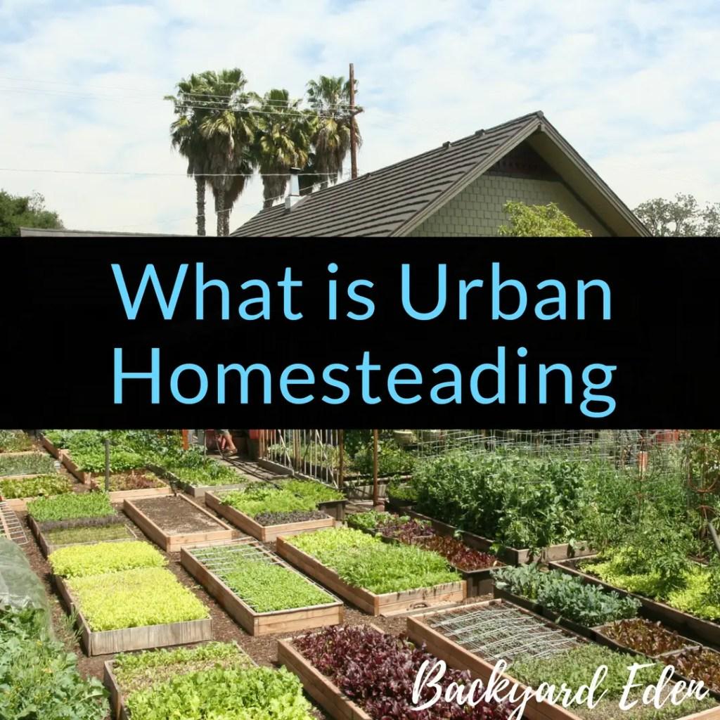 What is Urban Homesteading, urban homesteading, homesteading, Backyard Eden, www.backyard-eden.com, www.backyard-eden.com/what-is-Urban-Homesteading