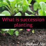 What is succession planting
