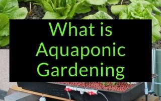 What is Aquaponic Gardening, Aquaponics, Backyard Eden, www.backyard-eden.com, www.backyard-eden.com/what-is-aquaponic-gardening