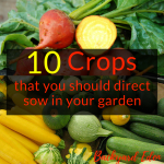 10 crops that you should direct sow in your garden, direct sow. planting a garden, Backyard Eden, www.backyard-eden.com, www.backyard-eden.com/10-crops-that-you-should-direct-sow-in-your-garden