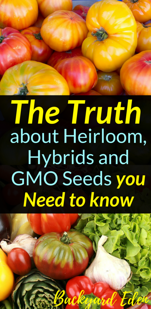 The Truth about Heirloom, Hybrid and GMO Seeds you need to know, Seeds, Heirloom, Hyrbid, Backyard Eden, www.backyard-eden.com, www.backyard-eden.com/the-truth-about-heirloom-hyrbid-gmo-seeds-you-need-to-know