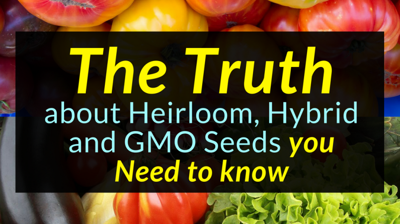 Seed Truth :The Truth about Heirloom, Hybrid and GMO Seeds you need to know, Seeds, Heirloom, Hyrbid, Backyard Eden, www.backyard-eden.com, www.backyard-eden.com/the-truth-about-heirloom-hyrbid-gmo-seeds-you-need-to-know