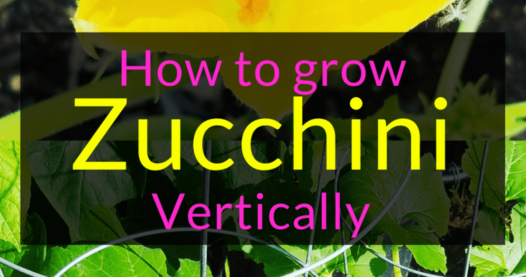How to grow Zucchini Vertically