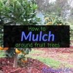 How to mulch around fruit trees, mulching, fruit trees, Backyard Eden, www.backyard-eden.com, www.backyard-eden.com/how-to-mulch-around-fruit-trees