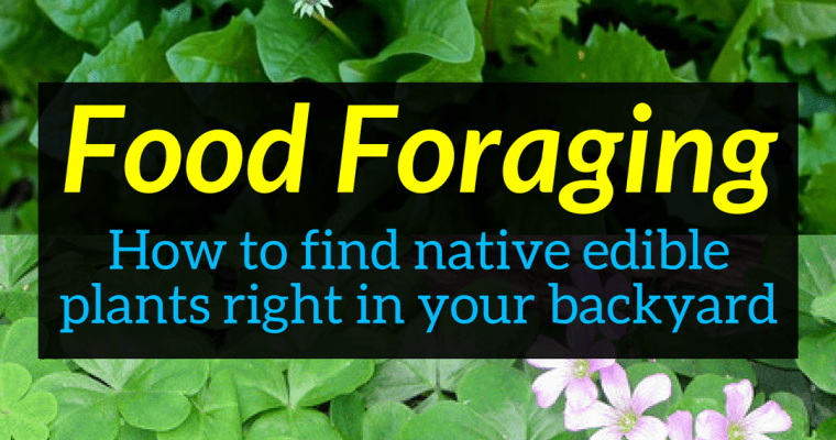 Food Foraging – How to find native edible plants right in your backyard