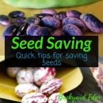 Seed Saving - Quick Tips for Saving Seeds, saving seeds, quick tips, Backyard Eden, www.backyard-eden.com, www.backyard-eden.com/seed-saving-quick-tips-for-saving-seeds