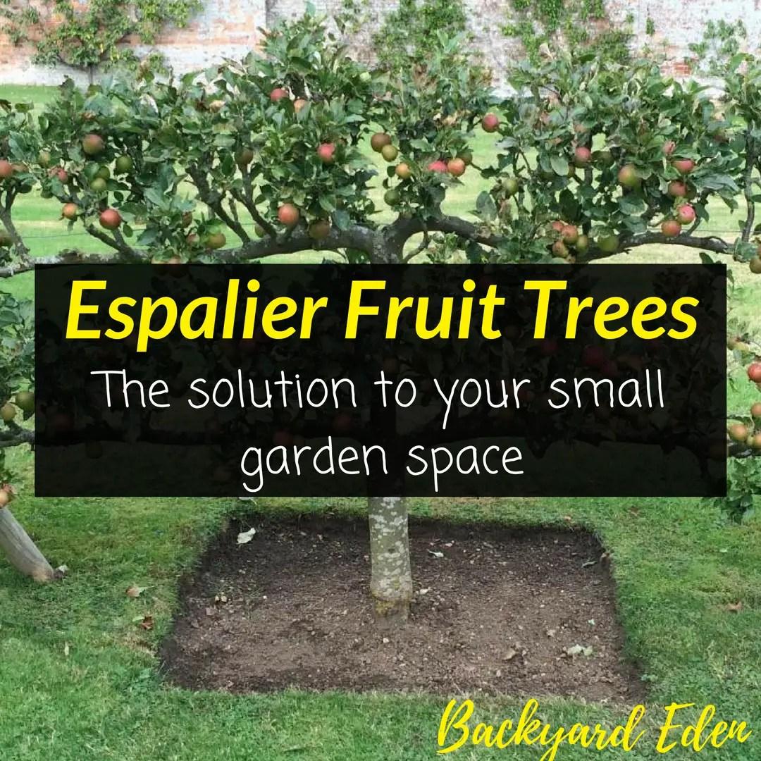 Espalier Fruit Trees   The Solution To Your Small Garden Space   Backyard  Eden