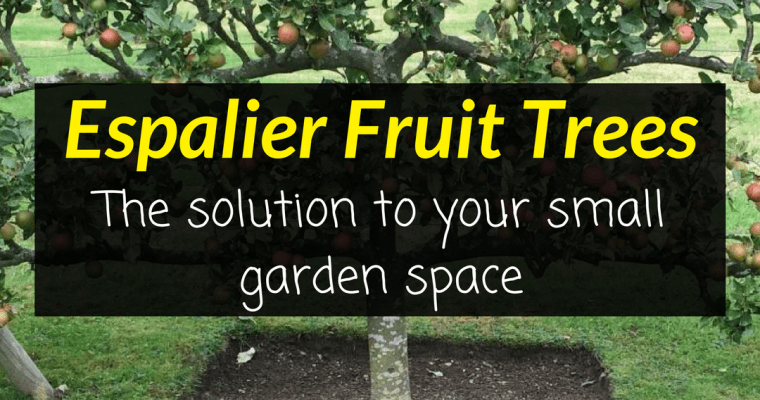 Espalier Fruit Trees  – The solution to your small garden space