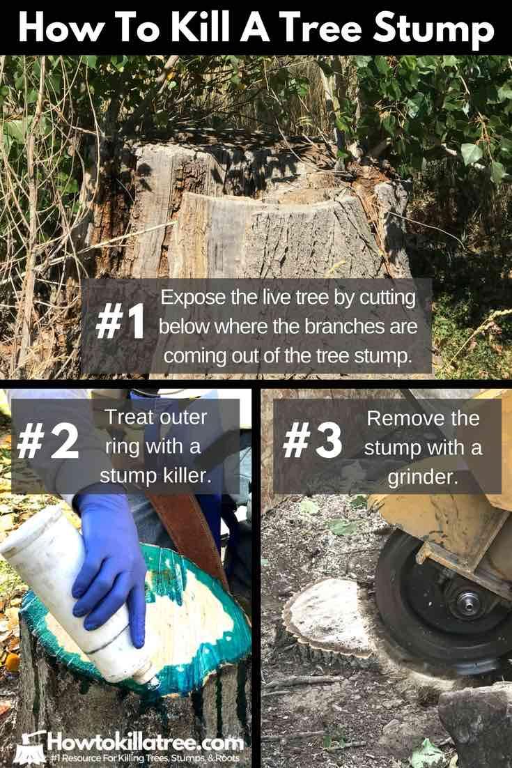 How To Kill A Tree Stump 12 Best Ways