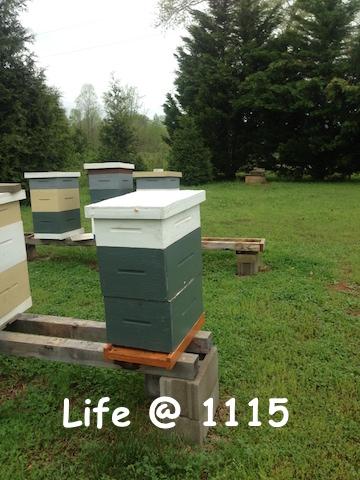 A Neglected Bee Yard Keeping Backyard Bees