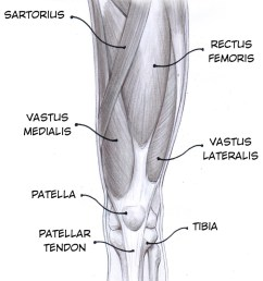 if you have good electrode placement and apply a smart tap to the patellar tendon you should see something like this note it will be small  [ 1000 x 1204 Pixel ]