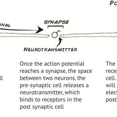 Blank Diagram Of Synapse 7th Grade Math Venn Worksheet In Edelbrock Elsavadorla
