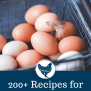 200 Recipes That Use A Lot Of Eggs