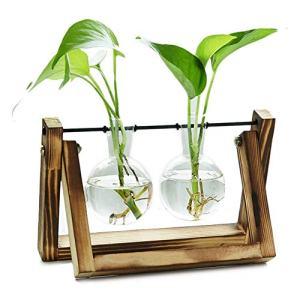 EssenceLiving 2 Bulb Glass Planter Vase with Wooden Holder, Plant Stand