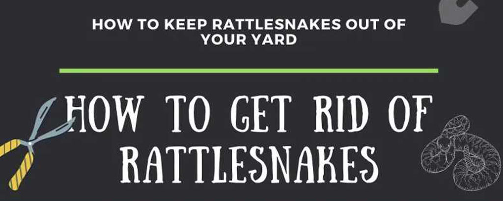 How to get rid of rattlesnakes
