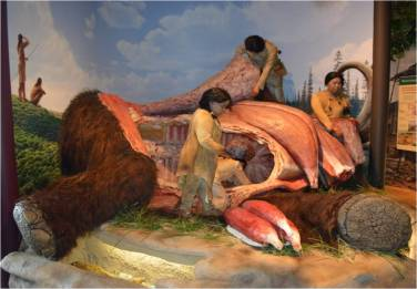 Who common was this scene? Did Paleoindians really hunt and butcher mammoths? Diorama at the Kenosha Public Museum, WI.