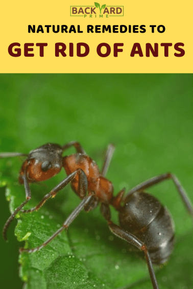 How to Get Rid of Ants in Your Yard? Natural Recipe! 6