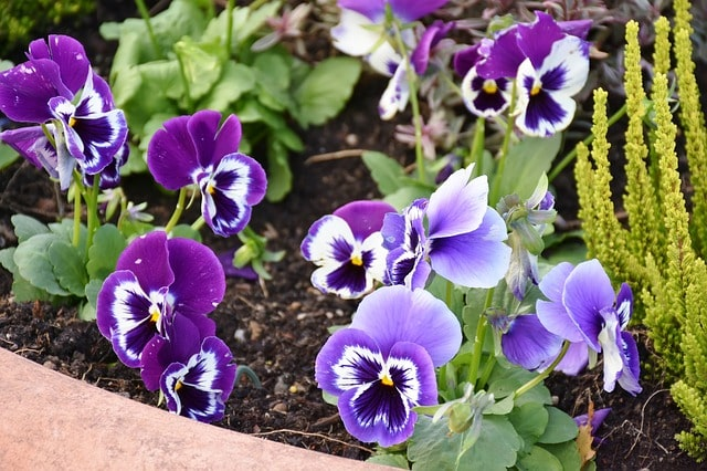 Tips & Ideas to Edging a Flower Bed to Brighten Your Backyard 4