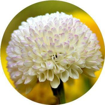 20 Most Breathtaking White Flowers in The World 19