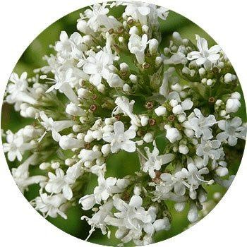 20 Most Breathtaking White Flowers in The World 2