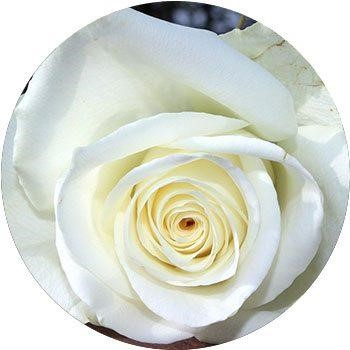 20 Most Breathtaking White Flowers in The World 3