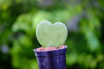 21 Types of Succulents for a Breathtaking Succulent Garden 4