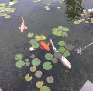 Detailed Guide To Building A Koi Pond Easily