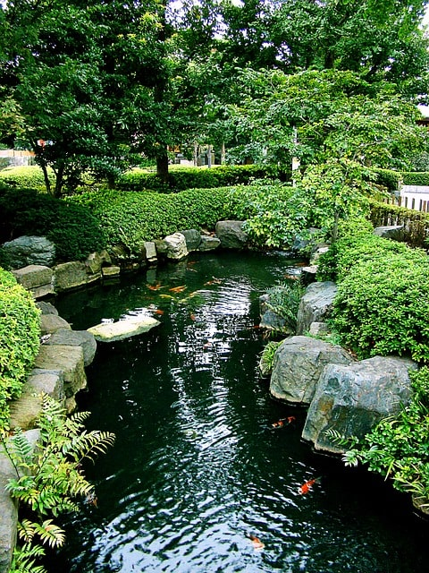 Detailed Guide To Building A Koi Pond Easily 4