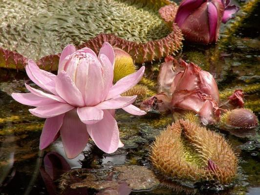 Easy Tips to Growing Water Plants for Your Pond 8