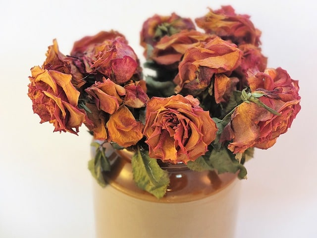 How to Preserve Flowers and Roses?