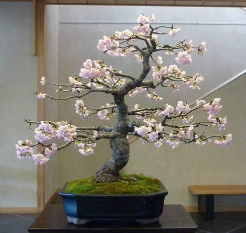 Top Eye-Catching Types of Bonsai Trees 1
