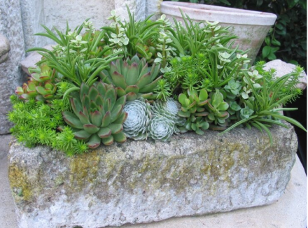 The 11 Perfect Pots For Succulents & Cacti 2