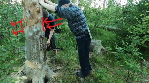 How to cut down a small tree push it