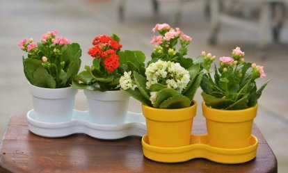 yellow & white pots for flowering succulents