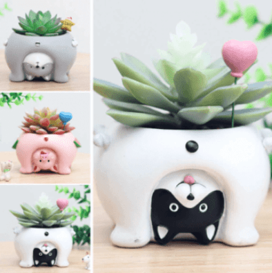 ceramic containers for succulents