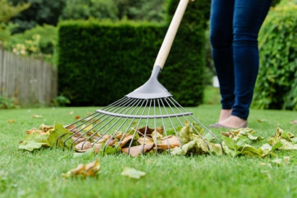 important lawn care tips in spring: remove the thatch
