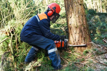 How to cut down a small tree in comfortable height