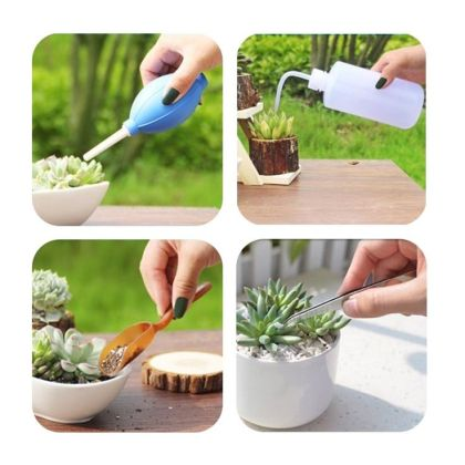 How to Propagate Jade Plant in 2 Ways 1