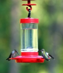 RUBY-THROATED HUMMINGBIRDS AT FEEDER - Blog - 1 Sept 2017