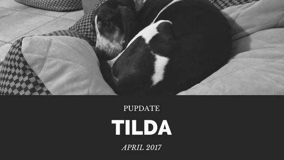 April 2017 PupDate - Tilda
