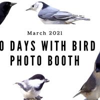 10 Days of Bird Photo Booth Trials