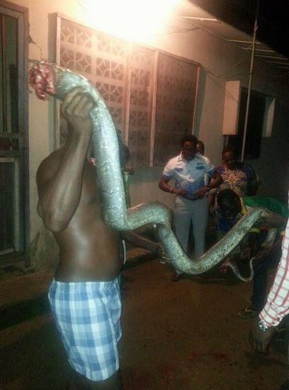 python-killed-house-lagos