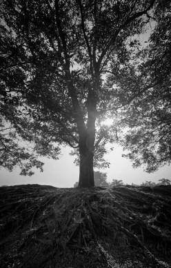 Tree of Legacy