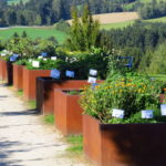 Kneippgarten-Kräutergarten