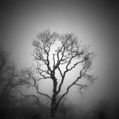 """""""Winter Tree,"""" by Kris.K.G"""