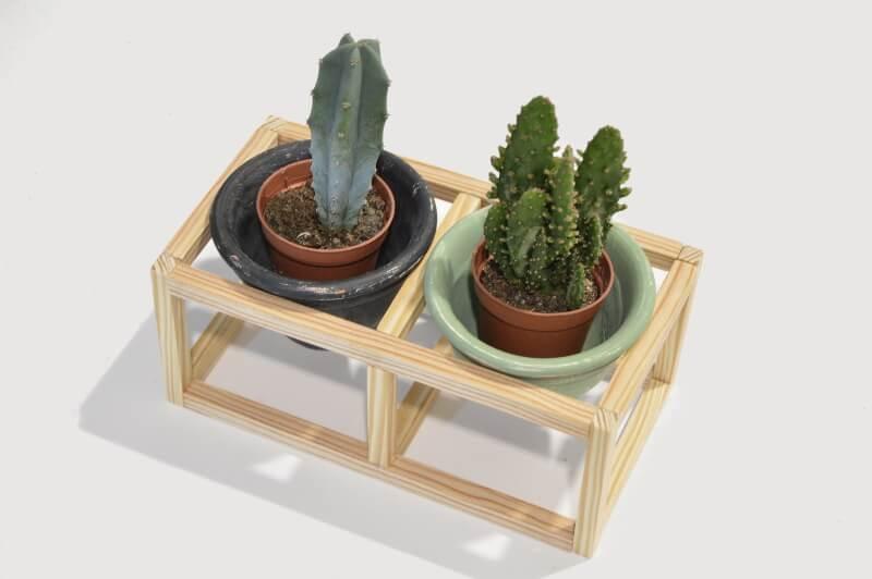 Portavelas para cactus